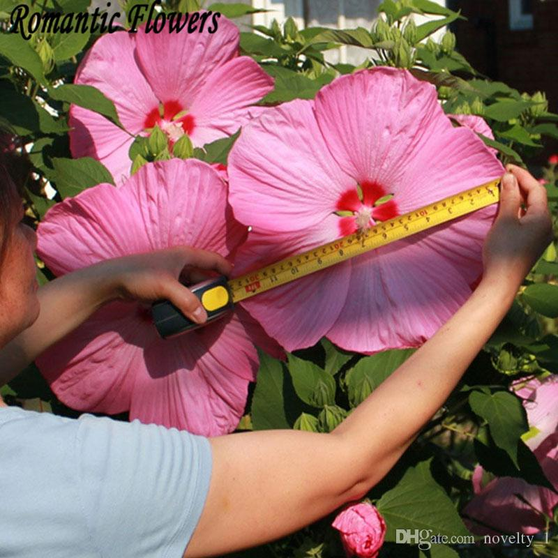 2019 50 Particlebag Giant Hibiscus Flower Seeds Hardy Mix Color