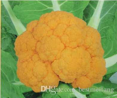 sale real summer aquarius excluded sementes healthy vegetable seeds golden cauliflower seed selling family garden 100seed from bestmeifang