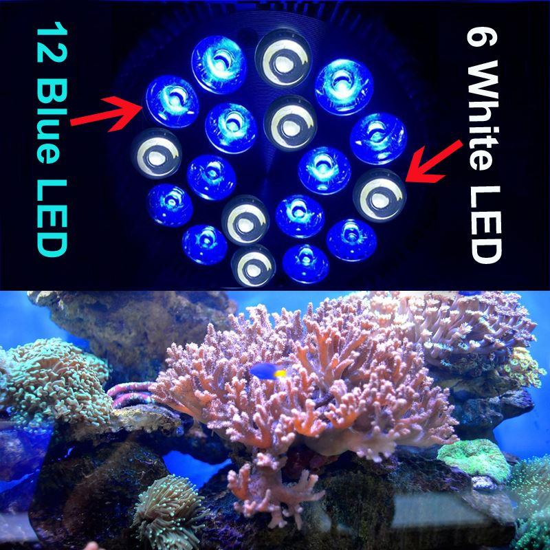 Rayway E27 Pa38 12blue 6white Led Aquarium Light Bulb Saltwater Coral Reefs u0026 Aquarium Fishes Tank Light Bulb Cheap Price Best Indoor Grow Lights T5 Grow ...  sc 1 st  DHgate.com : coral lighting - www.canuckmediamonitor.org
