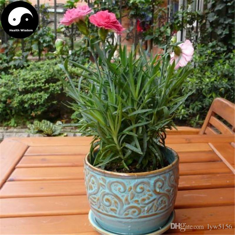 2018 buy carnations flower seeds plant dianthus caryophyllus