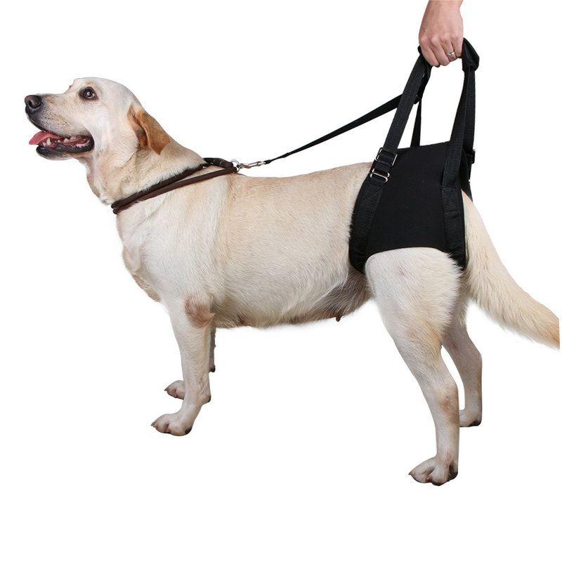 Service Dog For Elderly