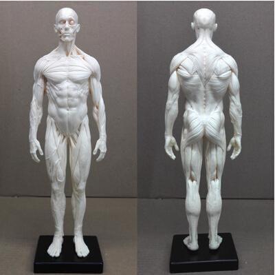 Großhandel Großhandels 1: 6 30cm Pu Menschliches Skeleton ...