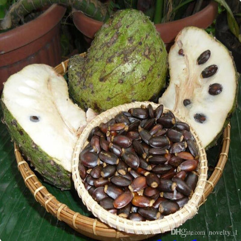 Fruit seeds Graviola Soursop Guanabana Annona Muricata Tropical Seed -  5pcs/lot