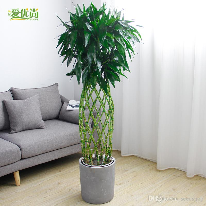 2019 Bamboo Bamboo Cage Seed Pot Plants Large Office Room