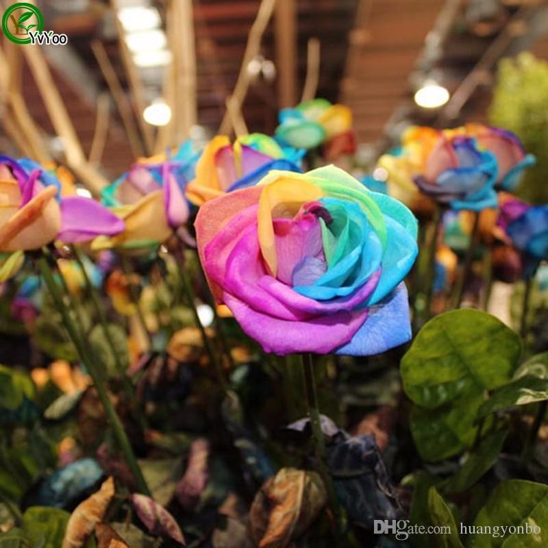 Bahçe bitkileri Güzel Gökkuşağı Gül Tohumları Çok renkli Gül tohumu açık bitkinin R34
