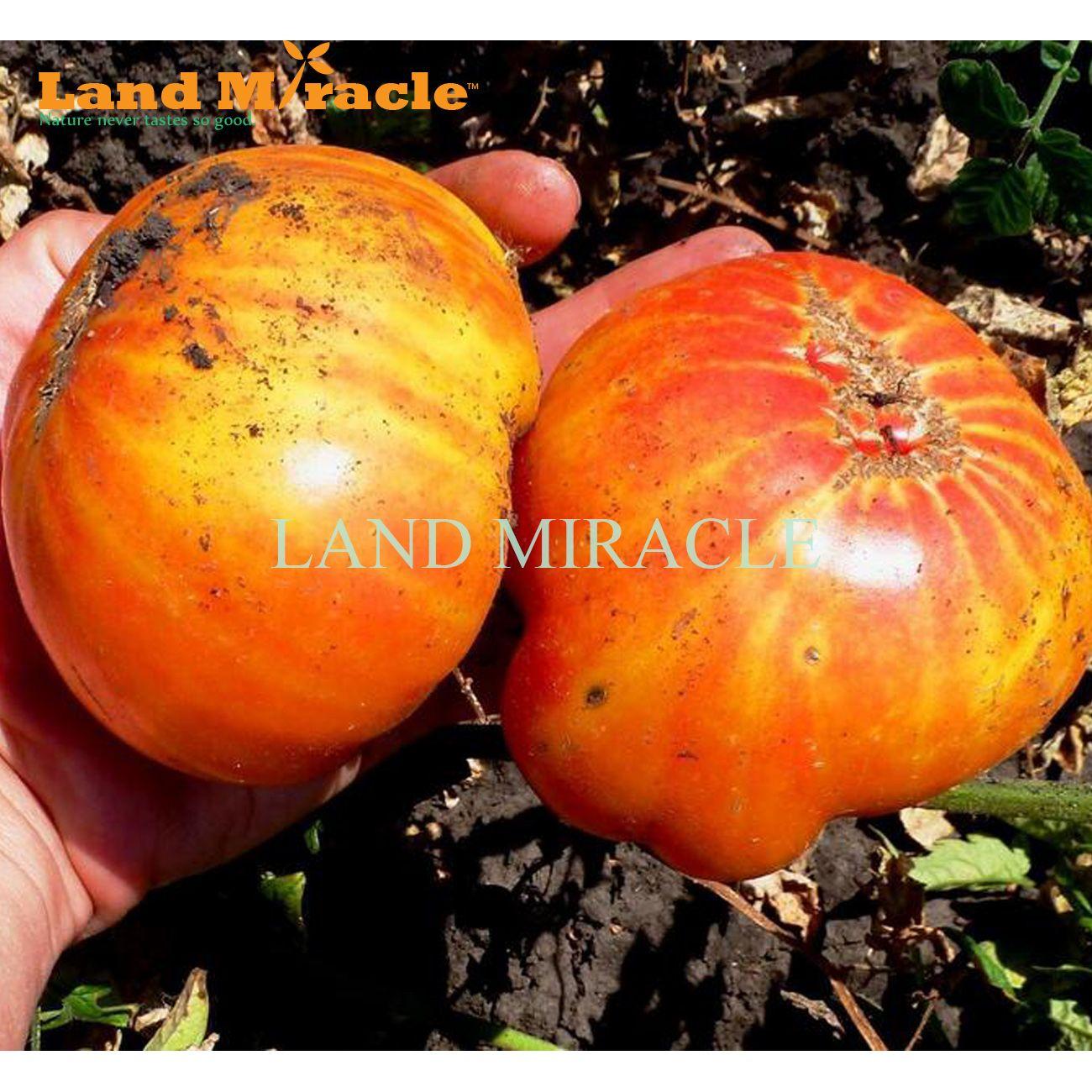 Raro Semi di pomodoro arcobaleno, 100 semi, vegetali commestibili biologici e semi di frutta pianta giardino domestico