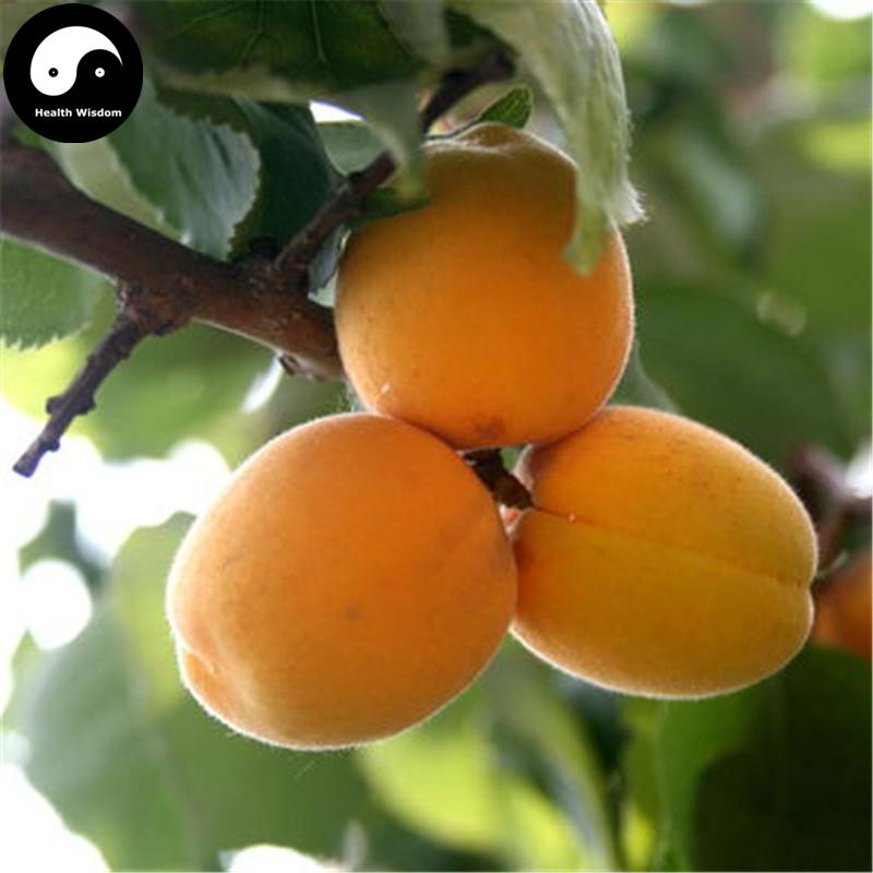 buy real armeniaca vulgaris fruit tree seeds plant apricot, Beautiful flower