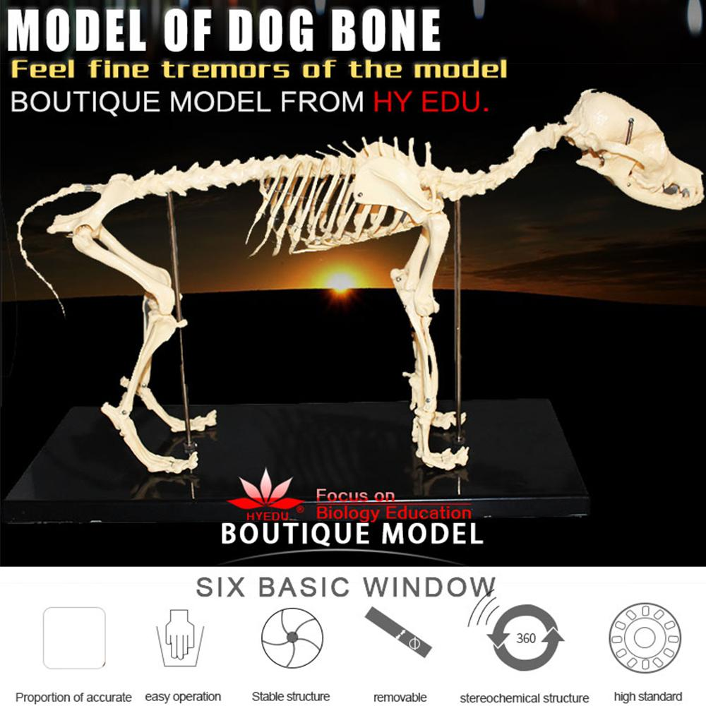 2018 Wholesale Sufficient Anatomy Factory Price Quality Medical ...