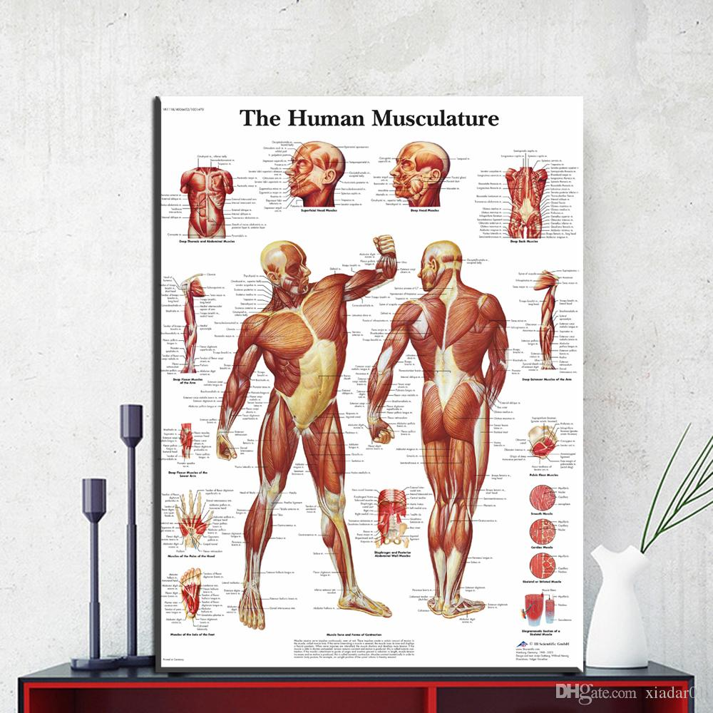 2020 Zz1854 Human Body Anatomy Canvas Art Print Painting Poster Wall Pictures For Living Room Home Decorative Hospital Decor No Frame From Xiadar01 9 95 Dhgate Com