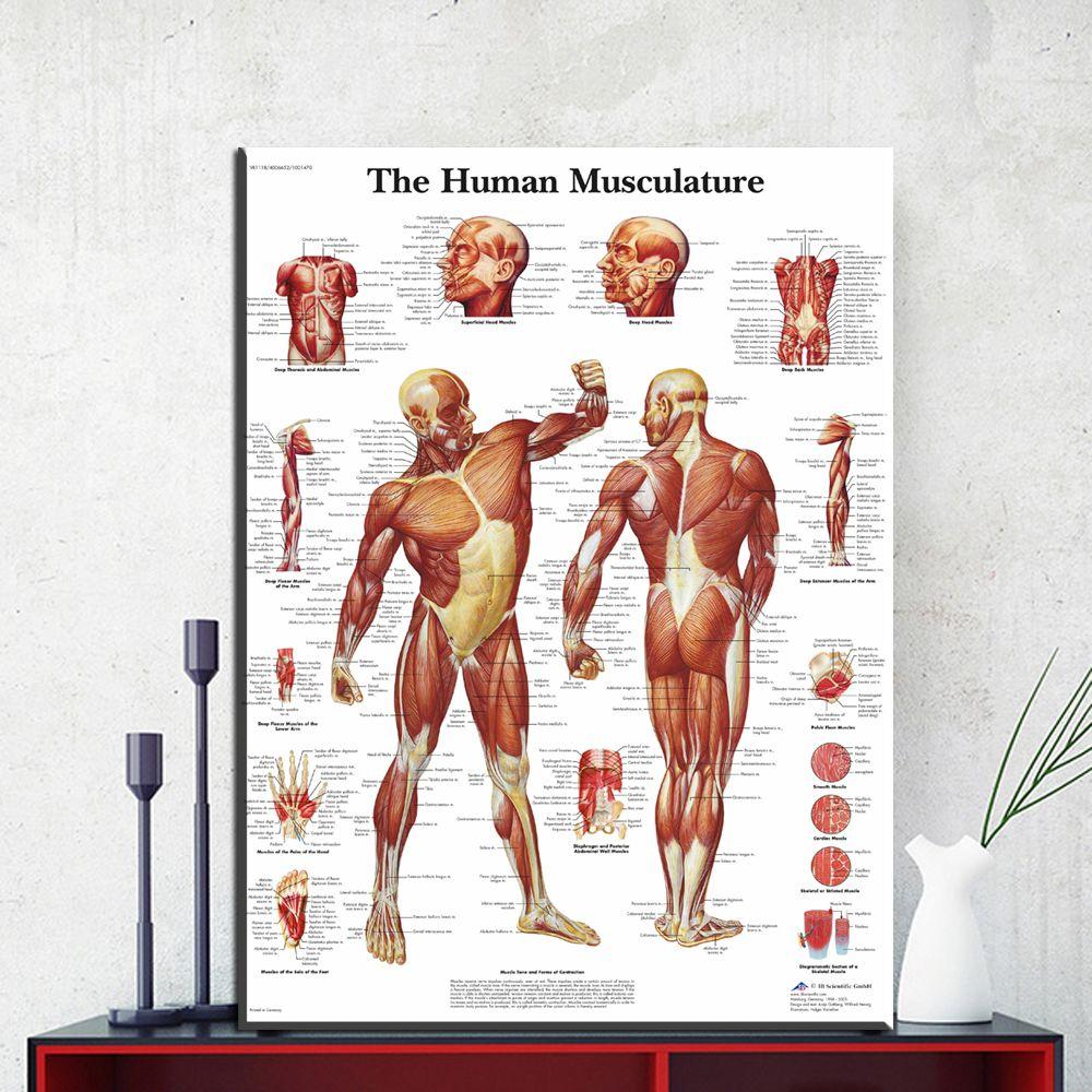 Großhandel Zz1854 Menschlichen Körper Anatomie Leinwand Kunstdruck ...