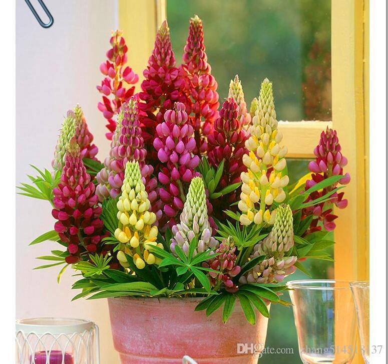 Acheter 20 Graines Graines De Lupin Fleur Lupin Violet Blanc Rouge