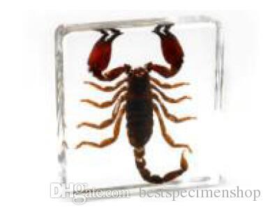 Resina acrílica Embutida Real Escorpião Espécime Bloco Transparente Mouse Paperweight Estudante Novo Tipo de Biologia De Aprendizagem Da CiênciaEnsino De Kits