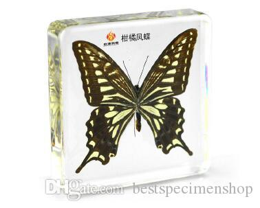 Kelebek Böcekleri Örnekler Akrilik Reçine Gömülü Böcekler Koleksiyon Çocuk ToysGifts Şeffaf Fare Paperweight Yeni Tip Bilim Kitleri
