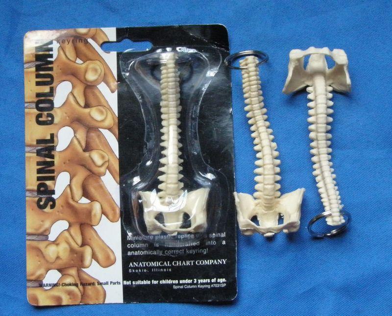 Compre Al Por Mayor Mini Anatomía Femenina Modelo De La Espina ...