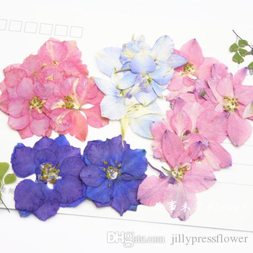 2019 Large Larkspur Diy Pressed Flowers Dark Pink Blue Color Dried