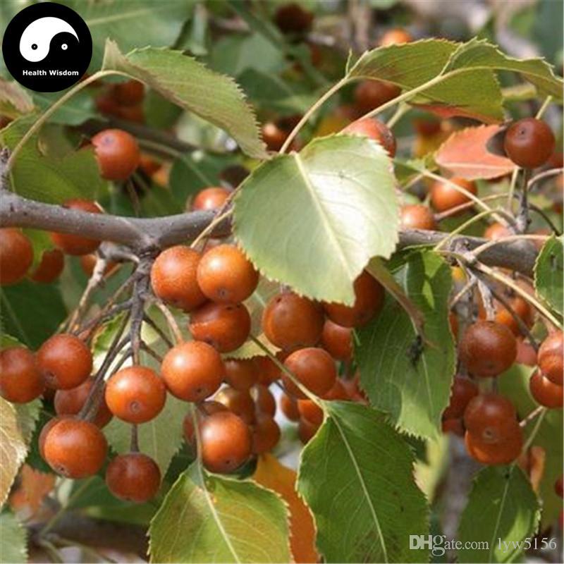 gro handel kaufen sie bohnen birnen baum samen pflanzen sie wilde frucht callery birne wachsen. Black Bedroom Furniture Sets. Home Design Ideas