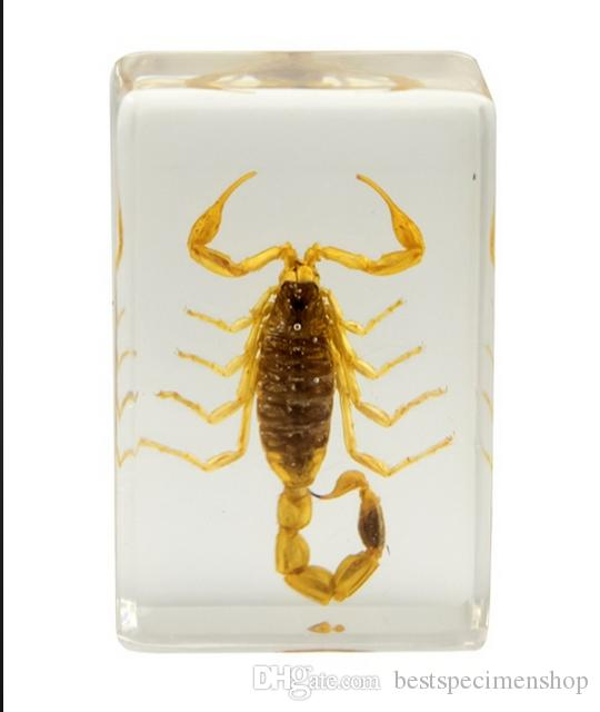 Brown Scorpion Specimen Acrylic Resin Embedded Real Scorpion Teaching Toys&Gifts Transparent Mouse Paperweight Kids New Biology Science Kits