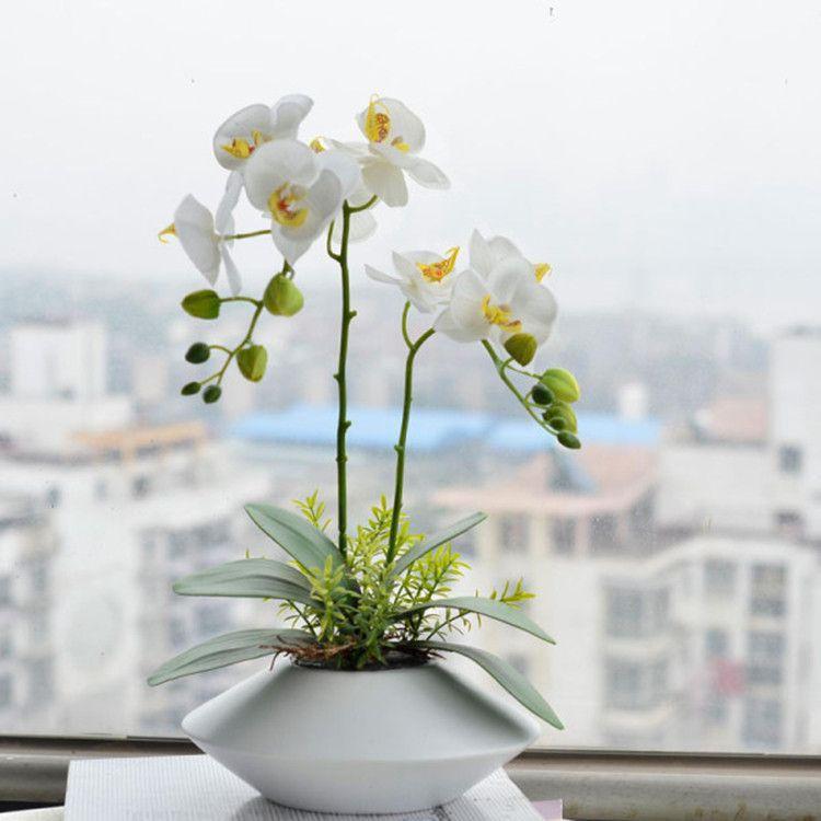 Acheter Vente Chaude / Pack Unique Papillon Orchidée Graine Jardin ...