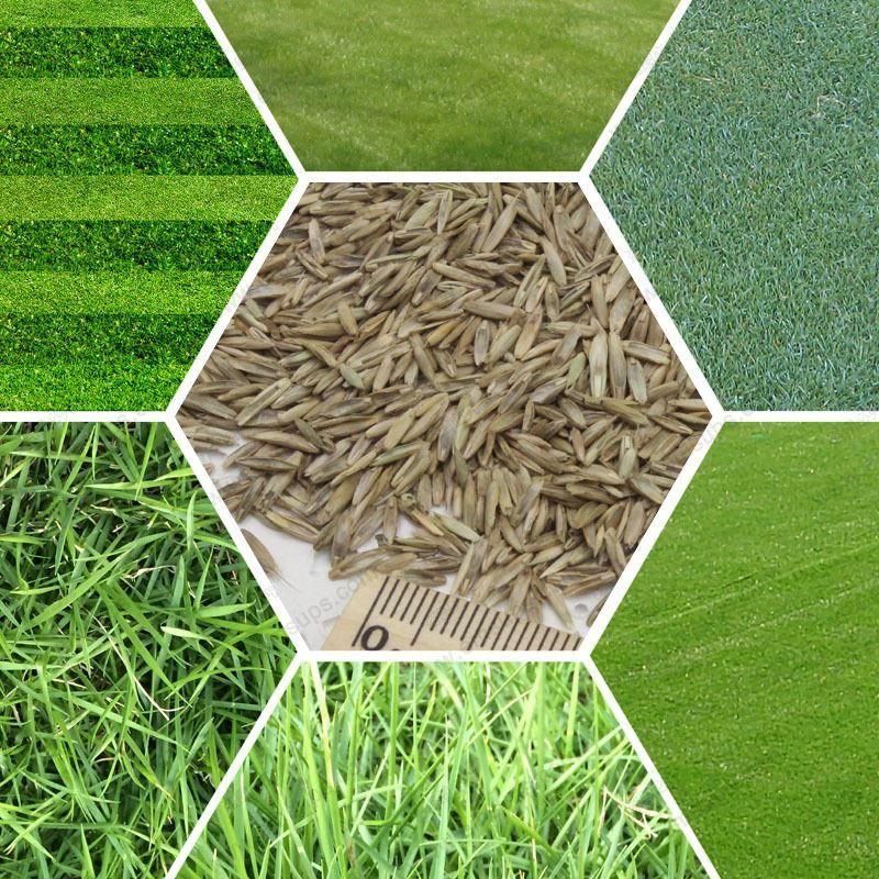 2018 Turf Grass Seeds Golf Soccer Fields Villa Special Grade