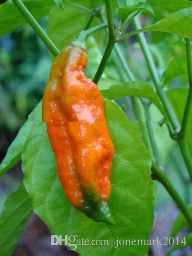 Red Bhut Jolokia Seeds Ghost Pepper Naga Jolokia HOT Chilli