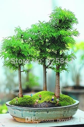 office bonsai. 2018 20 Juniper Bonsai Tree Seeds Potted Flowers Office Purify The Air Absorb Harmful Gases From Novelty_1, $9.95 | Dhgate.Com F