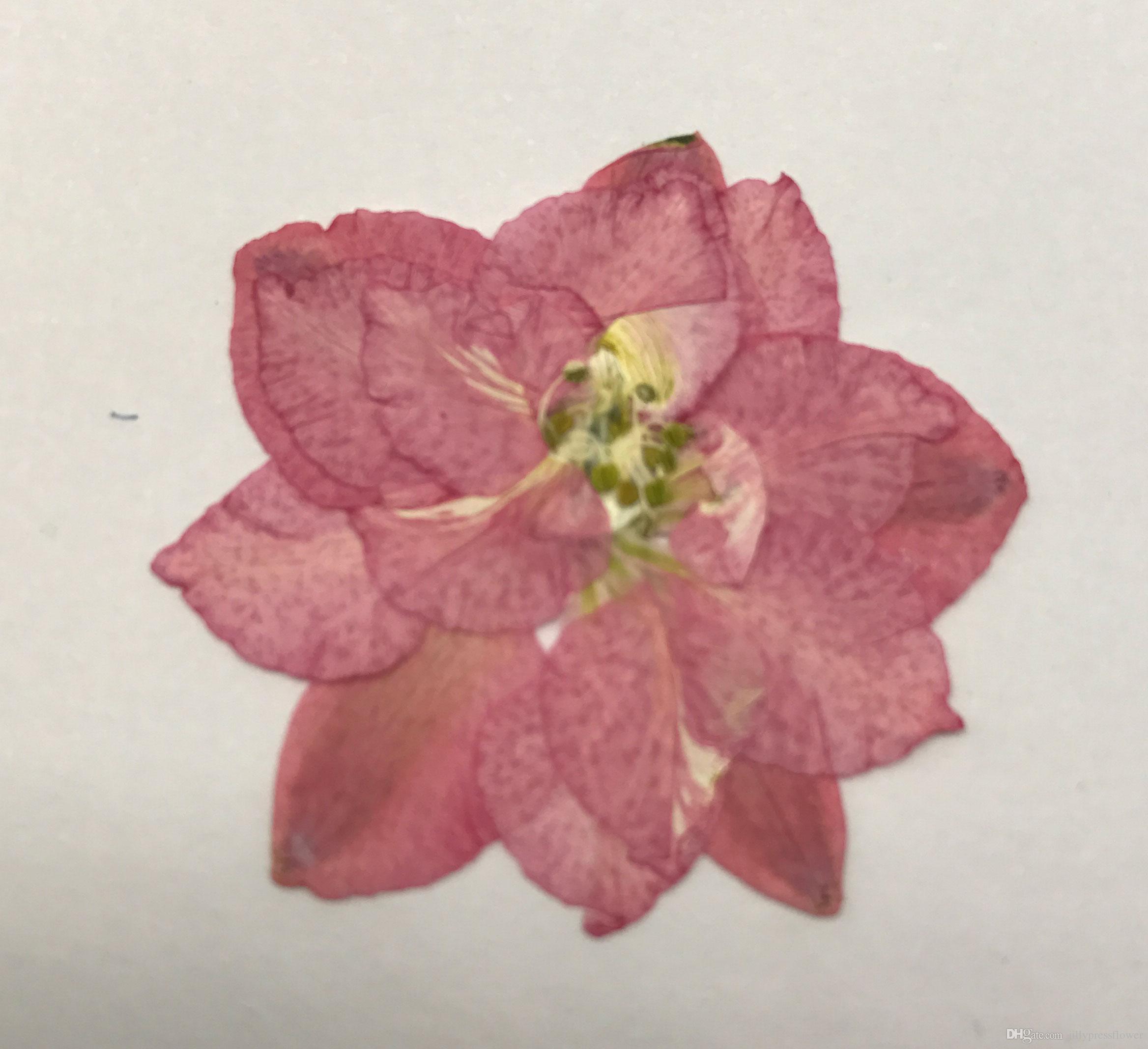 True Flower Original Pink Large Larkspur Press Flower For Candle ...