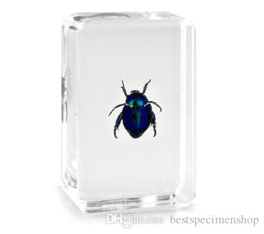 Golden Cockchafe Specimen Resin Embedded Cockchafer Science Teaching Specimen Transparent Mouse Paperweight New Baby Learning&Education Toys