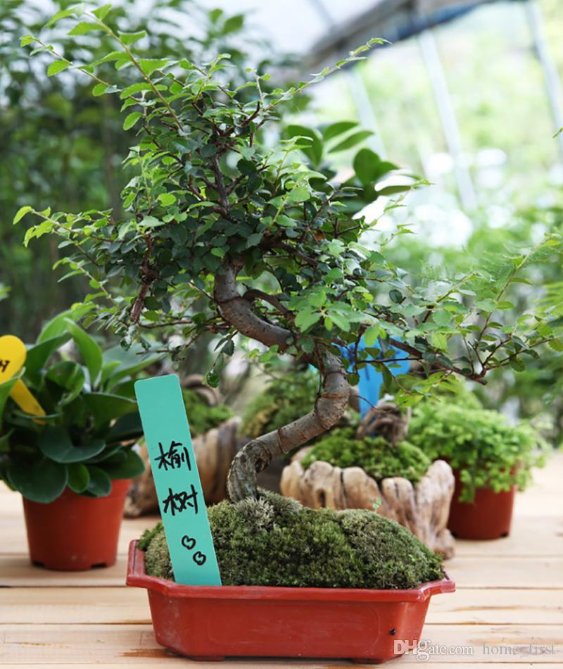 Environment Multicolor Plastic Plant Lable Gardening Insert Site Label Flower Fleshy Inserted Card Tag Ornamement Labels