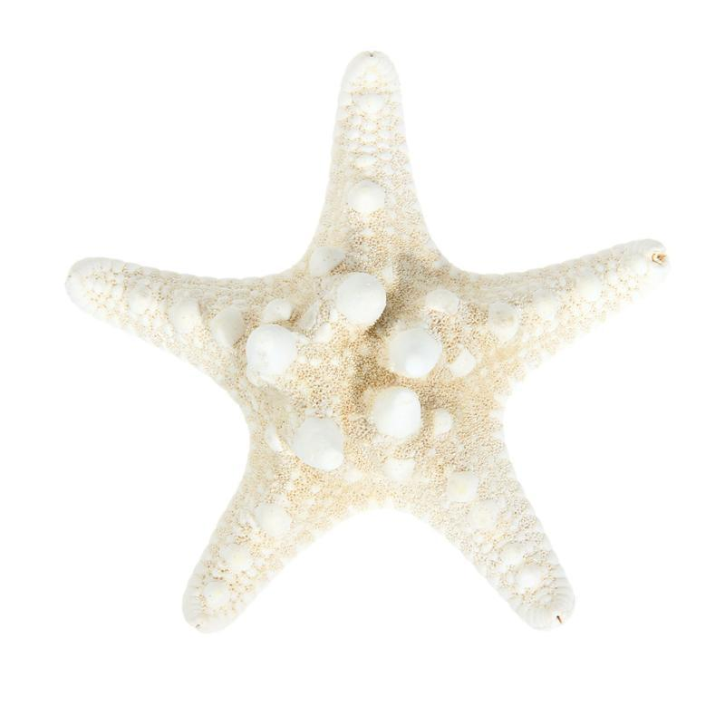 High Quality Natural Sea Star Girl Hair Stick Pins Lady Hair Clip Head Accessories Hair Claw Stick Headwear Accessories