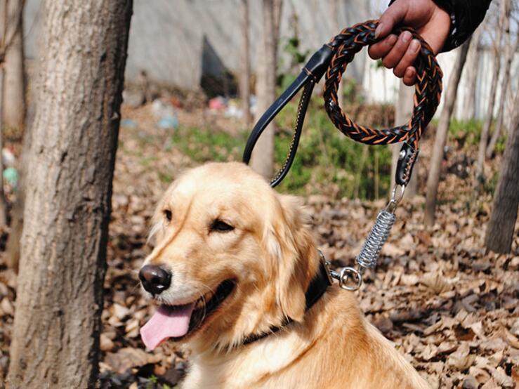 جلد طوق المقود الرصاص للكلاب متوسطة الحجم كبيرة - منتجات الكلب الملحقات قوي دائم مضفر الحيوانات الأليفة التدريب الجلود حزام الرصاص