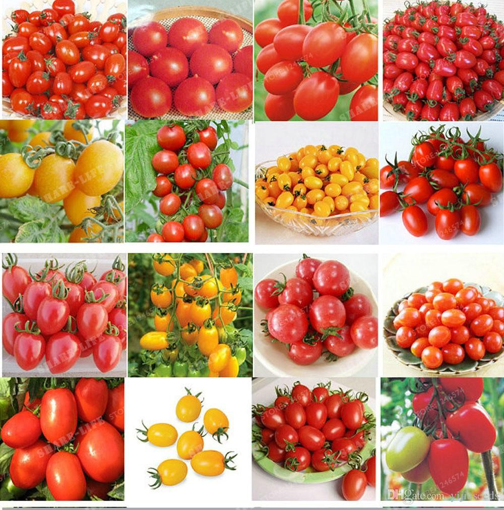 /bag cherry tomato seed. Rare Balcony Organic fruits vegetables seeds Bonsai Potted plant red,yellowTomato seeds