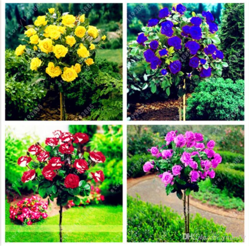 Beautiful Perennial Peony Flower Seeds Bonsai Plants Home Garden ILOE Garden & Patio