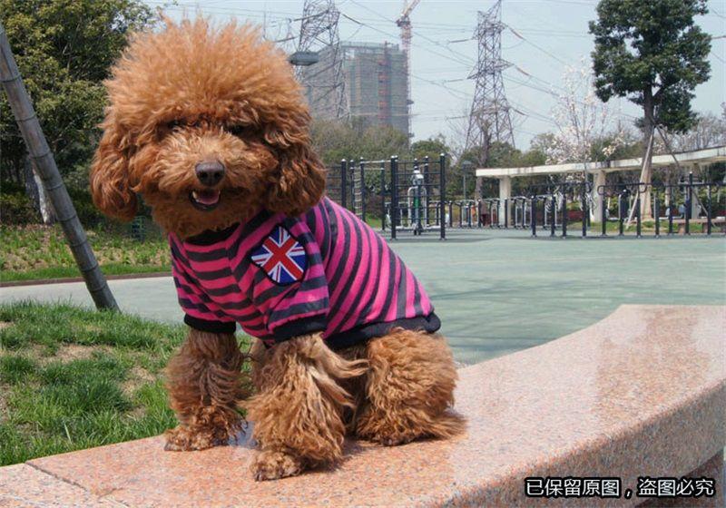 Stripe Forma Design Dog Apparel Primavera Verão Cool Pet Roupas Super Macio Material Cães Lazer Vest Para Decoração Venda Quente 5 2 Z