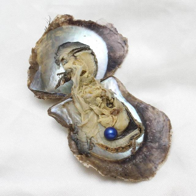 2018 DIY round akoya oyster Jewelry 6-7 mm Seawater pearl oyster as mystery gift with Vacuum Package