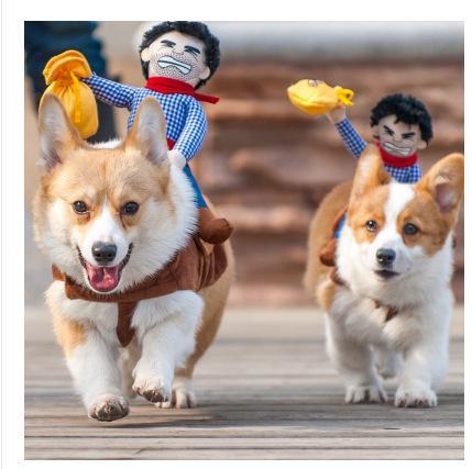 0c45f38ccb668 Compre Montar A Caballo Traje De Vaquero Perro Con Sombrero Para Perro  Pequeño Perro Grande Mascota Gato Divertido Golden Retriever Fiesta De  Disfraces De ...
