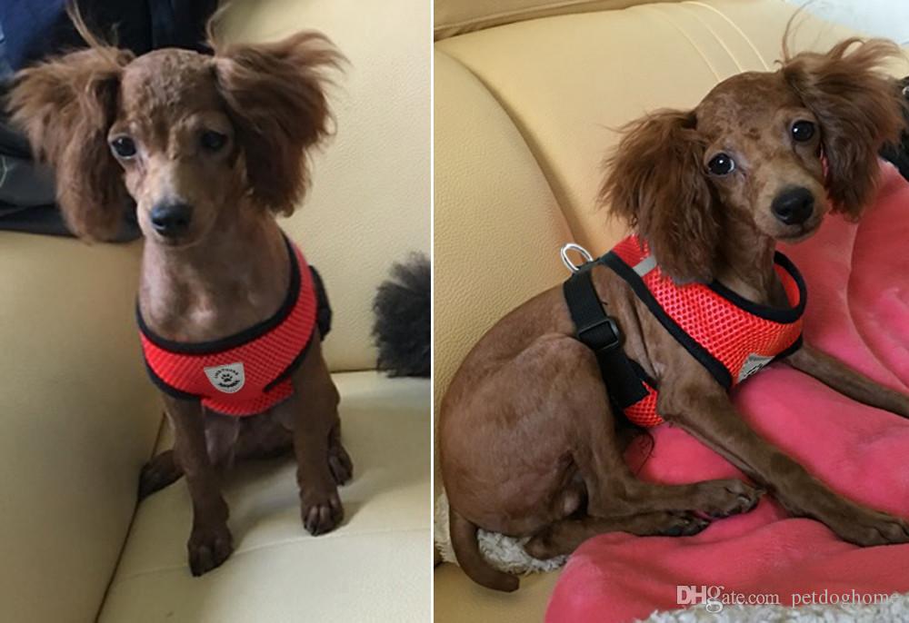 Nefes Örgü Küçük Köpekler Pet Harness ve Tasma Seti Yavru Yelek Chihuahua Yeni Evcil Köpek Koşum Için Pembe Kırmızı Mavi Siyah