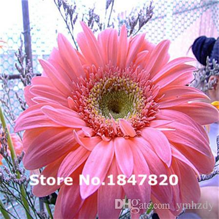 100 Pcs/Pack Hot Gerbera Seeds Mix Colors Potted Chrysanthemum Flowers Seeds In Bonsai Diy Home Garden Plants With Strong Ability To Grow