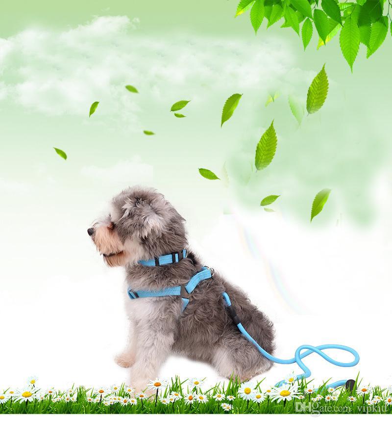 Collares Dog Leashes 10 Cores Pode Escolher Moda Collars Dog Leashes Ao Ar Livre Melhor Ferramenta V 001