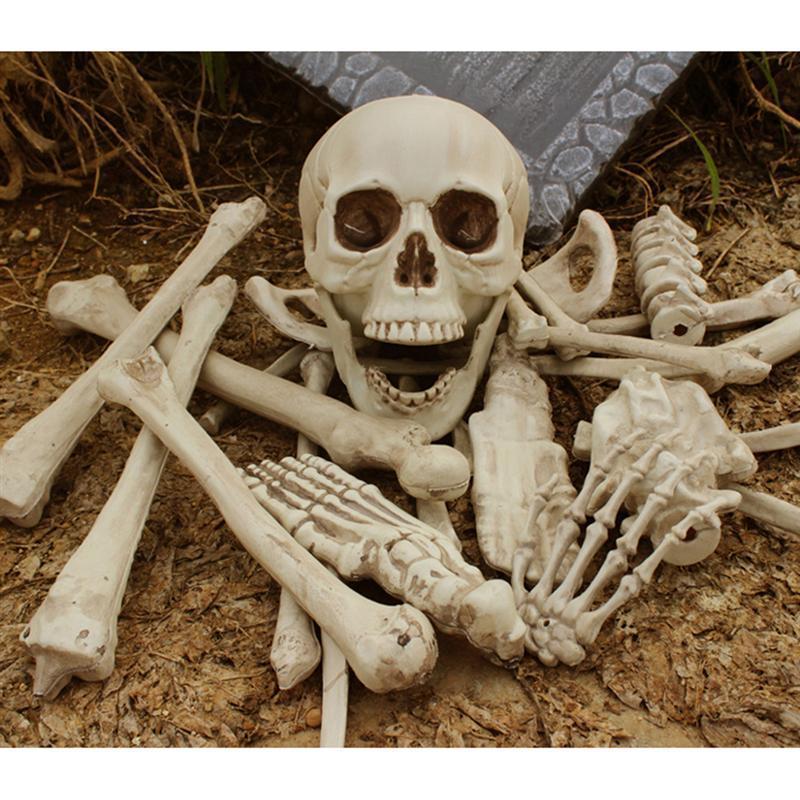 Compre 12lb Bolsa De Huesos Bucky Esqueleto Humano Halloween Props ...