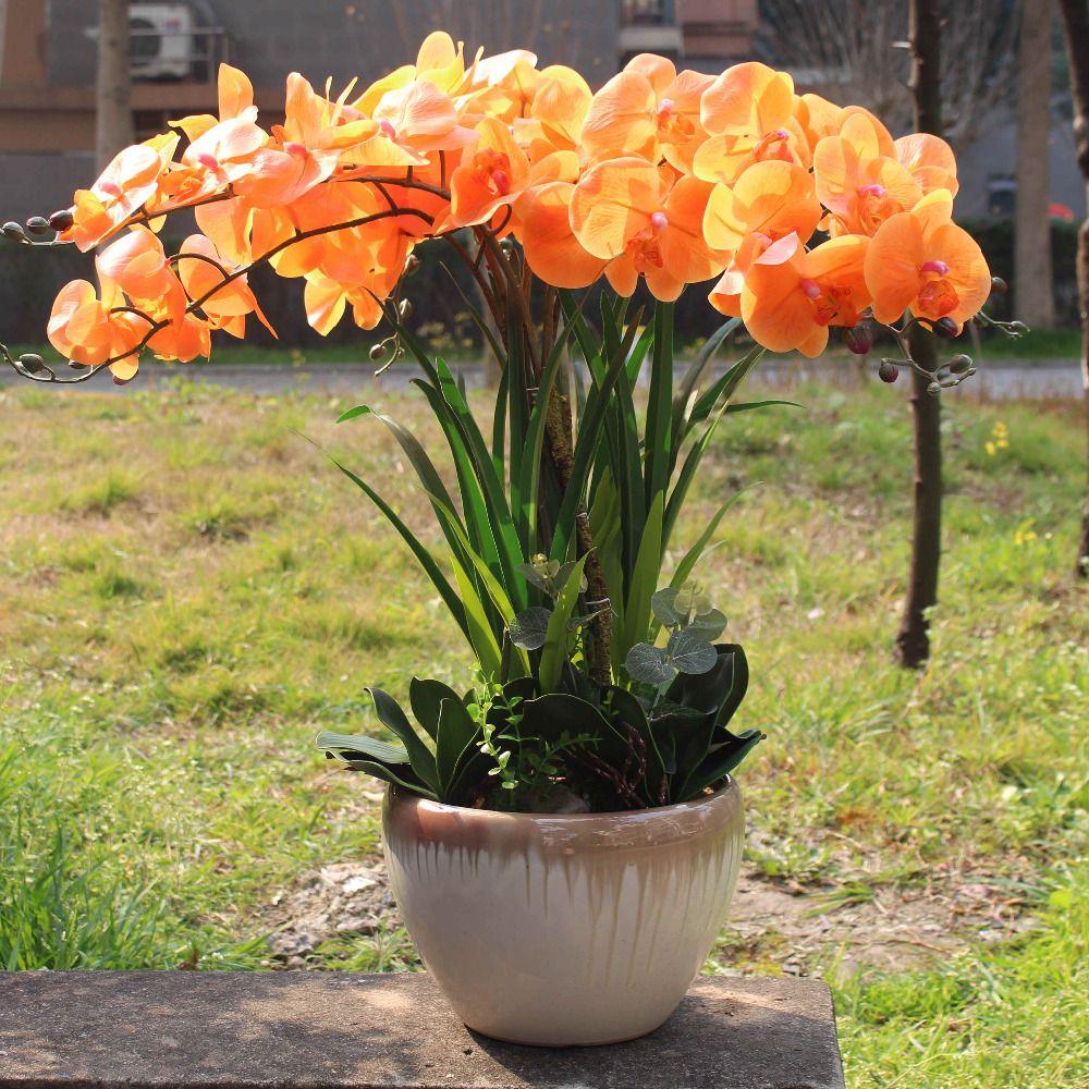 Compre Naranja Orquídea Puesta De Sol Color Verdadero Tacto Flor ...