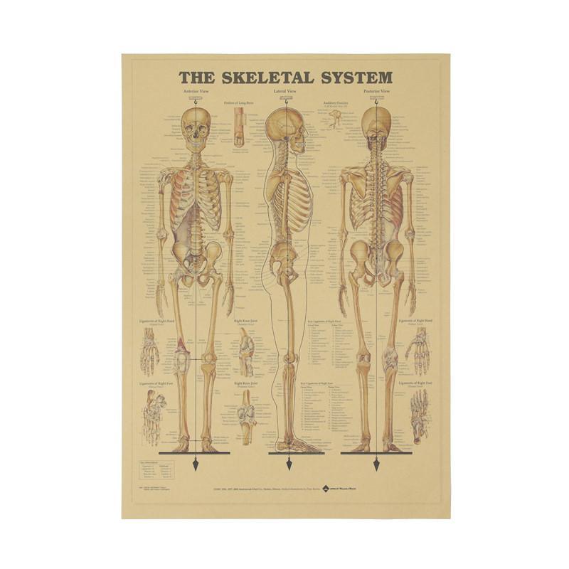 Großhandel Das Skelett Der Körper Struktur Nervensystem Poster Bar ...