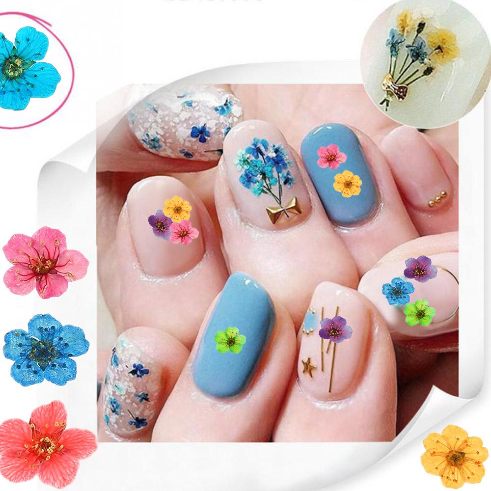 Mixed Dried Flowers Nail Art Decoration Preserved Flower With Heart ...