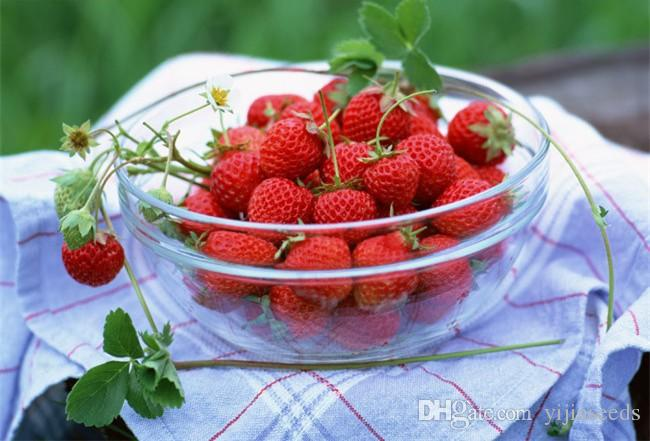 /bag strawberry seeds giant strawberry Organic fruit seeds vegetables Non-GMO bonsai pot for home garden plant seeds