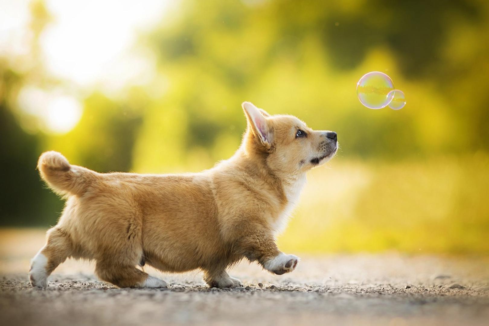 2018 Puppy Dog Bokeh Bubble Cute Little Animal Artwork Living Room ...