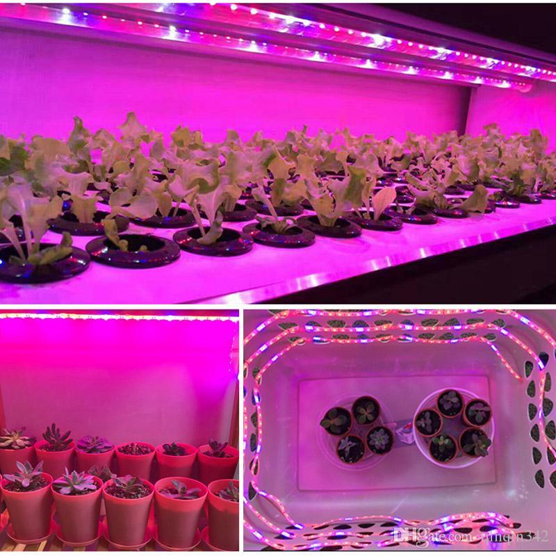 Растение растет света полный спектр светодиодные полосы растут свет цветок фито лампа 5 м водонепроницаемый красный синий 4: 1 Для парниковых гидропоники + адаптер питания