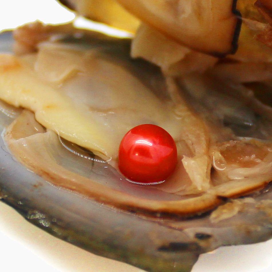 Oyster perla naturale d'acqua dolce all'ingrosso, perla è AAAA6-7mm, i colori sono disponibili in una varietà di colori spedizione gratuita