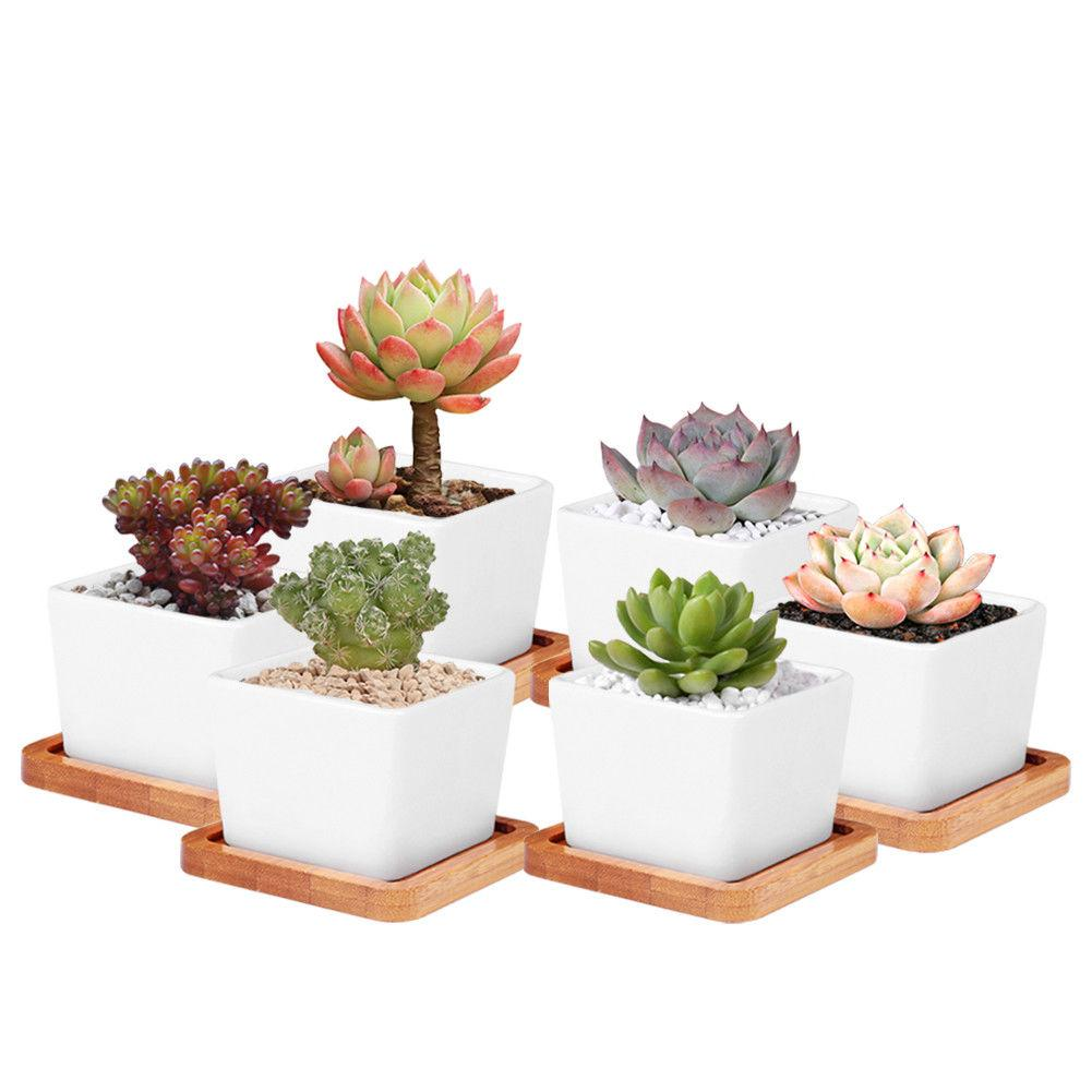 Succulents Pots With Bamboo Base Decorative Simple White Flower Pots