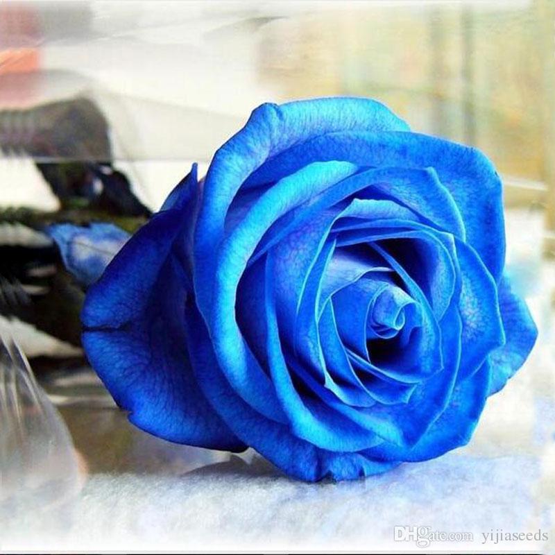 / sac Rare Escalade Rose graines coloré rose graines spécial fleur graines Polyantha rose bonsaï plante pour jardin de la maison