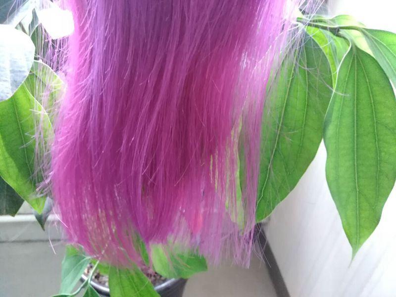Ombre Feixes de Cabelo Humano Roxo Virgem Brasileiro Dois Tons Coloridos Extensões de Cabelo Humano Muito Liso Cabelo Ombre Tece