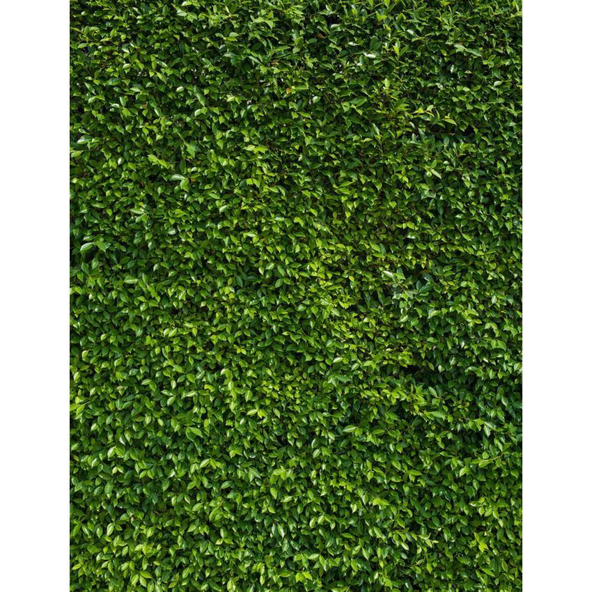 Acquista Fotografia In Vinile Fotografia Sfondo Verde Foglia Sfondo